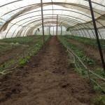 L'hivernacle amb els últims cultius d'hivern