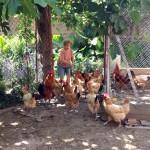 La Lola alimenta els pollastres a la masia Malet
