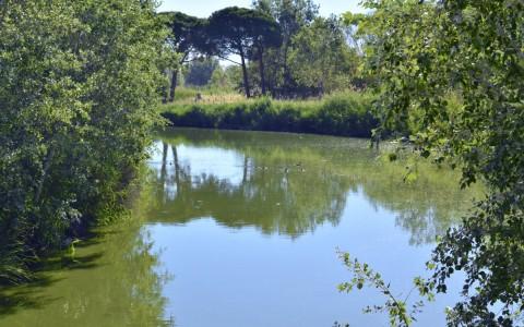 "Humedales en el centro de Castelldefels: ""La Olla del Rey"""