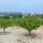 Les terres reservades a Santa Coloma de Cervelló són d'agricultura de muntanya. Els fruiters dominen el paisatge.