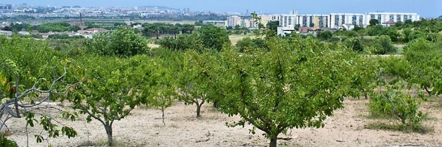 Santa Coloma de Cervelló crea una bossa de terres perquè les cultivin nous pagesos