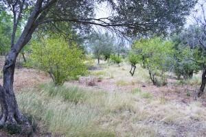 La idea es que los terrenos reservados recuperen su uso agrícola por parte de nuevos payeses.